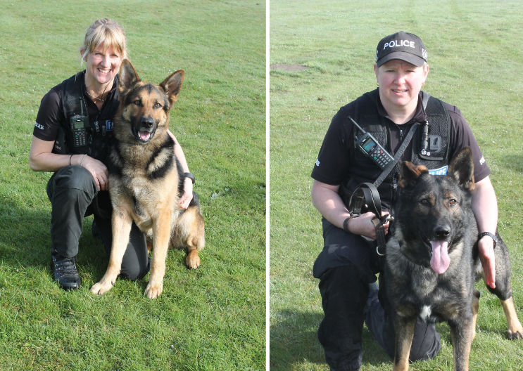 wilts police dogs retire calne news